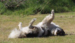 Saiba Agora Como Acabar Com os Carrapatos do Seu Cão