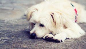 Meu Cão Resfriou, o que fazer? Cuidados básicos com o Seu Pet
