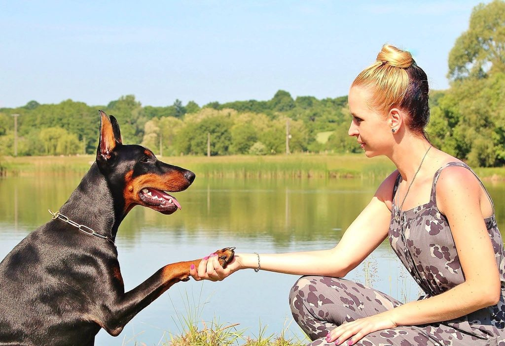 Como Ensinar Seu Pet a Dar a Pata e Sentar