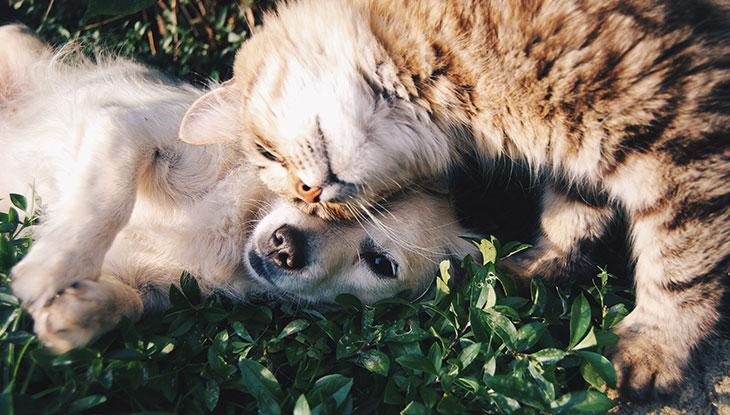 Saiba como Denunciar Maus-Tratos aos Animais