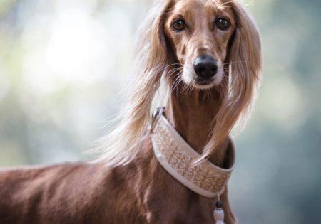 Acessórios para Deixar o Seu Pet na Moda